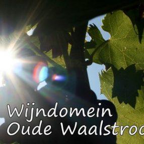 Wijndomein Oude Waalstroom
